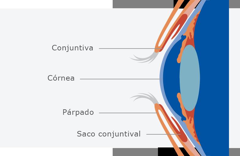 Ojos sanguíneos los en vasos dilatados qué causa